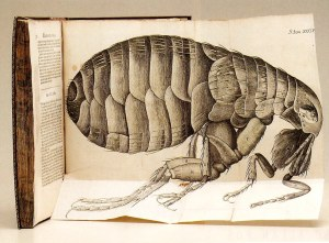 Hooke's Flea, From 'Micrographia'